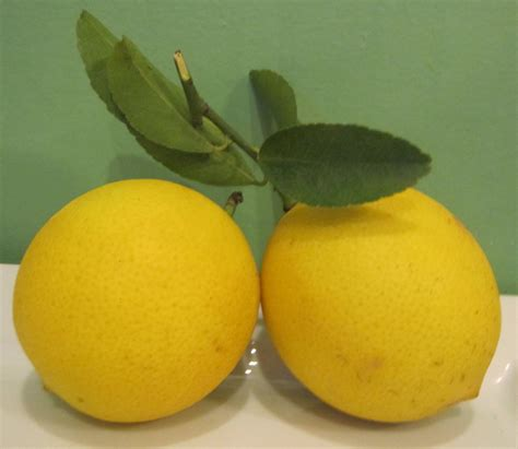 shaker lemon pie with my meyer lemons nonsequiteuse