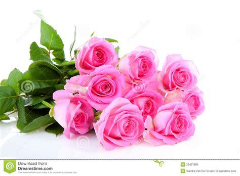 imagenes de rosas rosadas imgenes de rosas bellas auto design tech