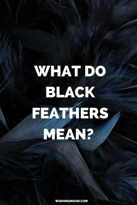 What Do Black Feathers Mean Wishing Moon Black Feather Meaning