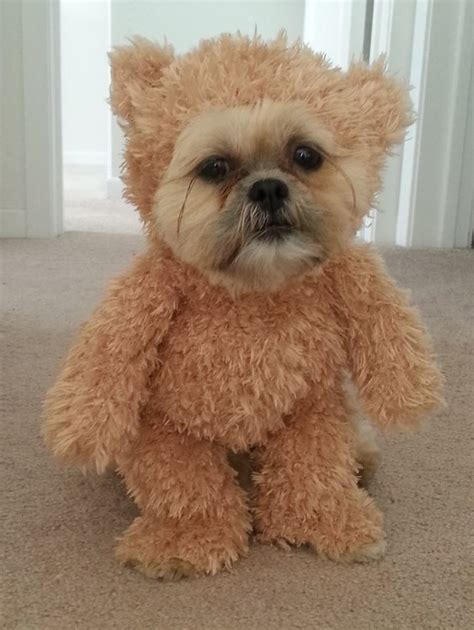 teddy puppy stop right there ewok walking teddy costume geekologie