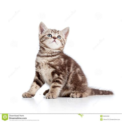 Cute Cat Kitty Looking Up Stock Photo - Image: 36334230