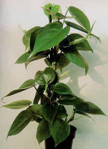 come curare le piante d appartamento come curare le piante da appartamento notizie it