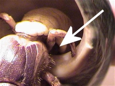 Do Crabs Shed Their Skin by Hermit Crab Care Moulting Vote Hermit Crabs Or Turtles