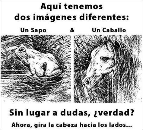 ilusiones opticas graciosas ilusiones 243 pticas sapo y caballo imagenes chistosas