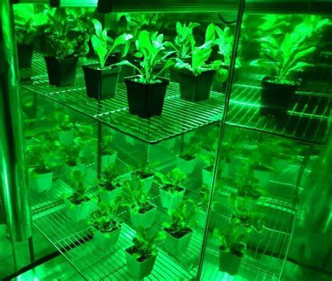 grow room green light gator green led grow room work light review