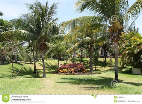 palmen im garten palmen garten stockbilder bild 21625284