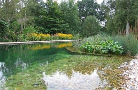 backyard swimming pond 17 swimming pools you wish were in your backyard