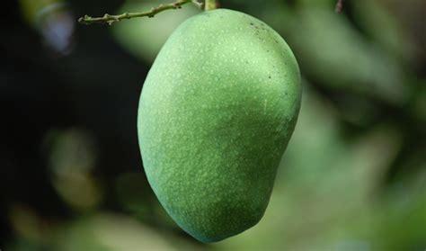 pengertian  jenis buah tanaman detiktanicom