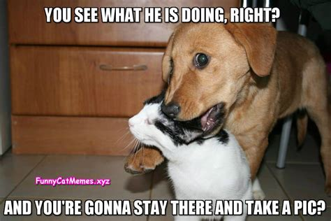 Dog Cat Meme - dog and cat memes funny