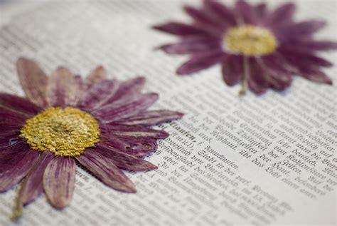 diy mit blumen blumen trocknen floraqueen deutschland - Blumen Trocknen