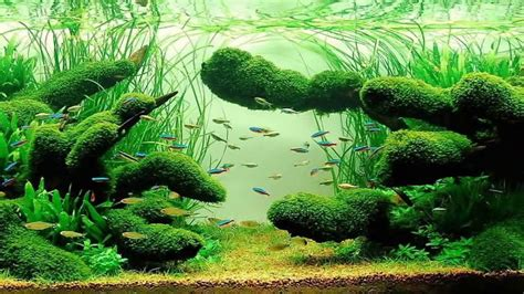 aquascaping for beginners java moss aquascape www pixshark com images galleries