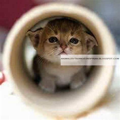 fotos animales bebes tiernos animales tiernos inspiran im 225 genes de animales bebes peque 241 os