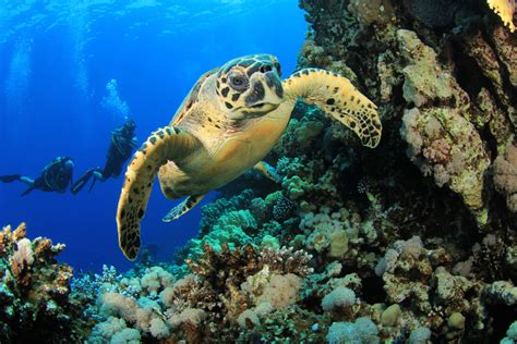 padi dive scuba diving etiquette avoid putting your dive boot in