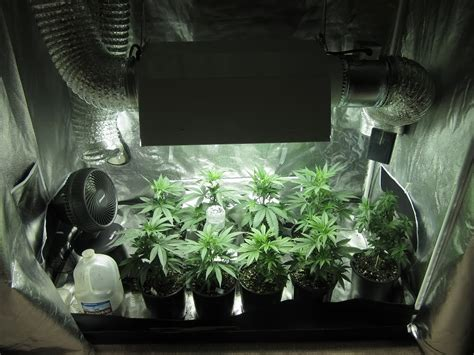 Best Way To Grow In Your Closet by The Best Way To Grow Marijuana Inside In Your House