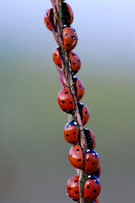 the 25 best ladybugs ideas on ladybug