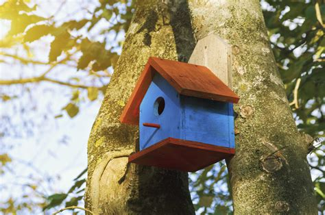 when do you clean out bluebird houses sciencing