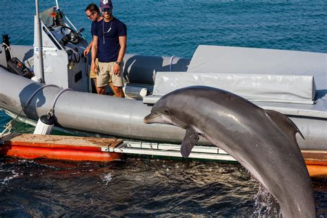 Find In The Navy Navy Dolphins Practice In Key West How To Find Mines In The Wusf News
