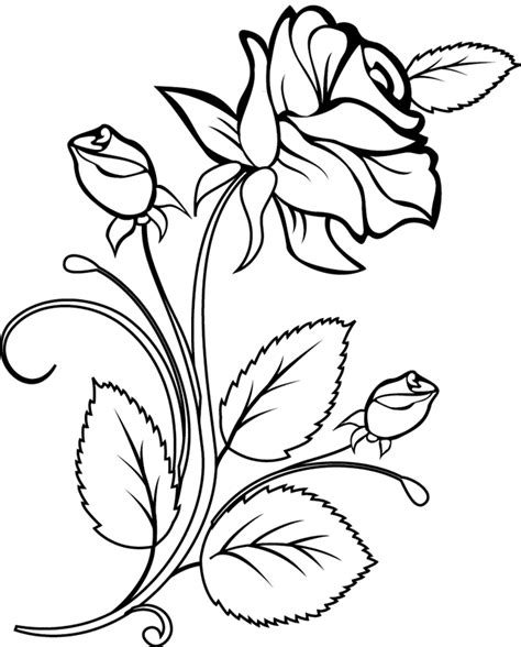 coloriage une rose et des boutons de rose dory fr