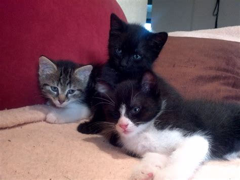 katzenbabys suchen ein zuhause katzenbabys suchen ein liebevolles zuhause katzenkinder