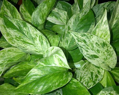 best plants for low light the tattooed gardener top 10 houseplants for low light