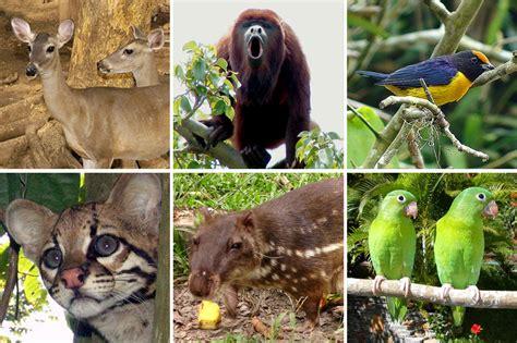 imagenes de venezuela flora y fauna venezuela dictan medida cautelar a ciudadano por posesi 243 n