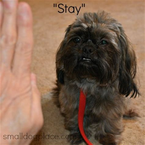 basic puppy commands 5 basic commands every small should