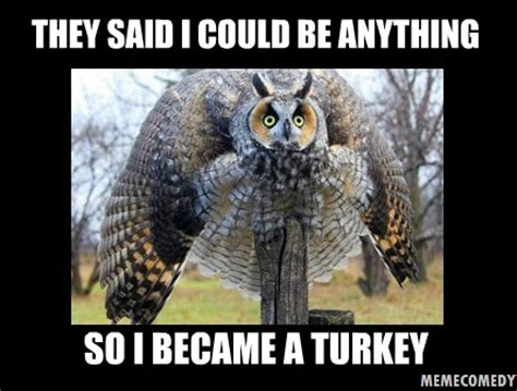 Meme Owl - the owl turkey meme by memecomedy on deviantart