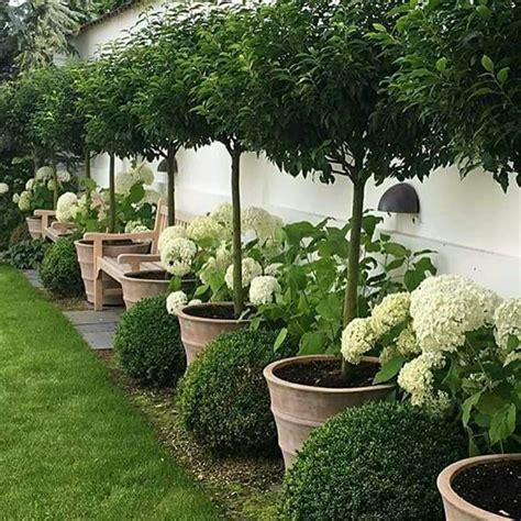 best 25 courtyard gardens ideas on small