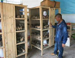 Plans For Small Homes Quail Rearing The Untapped Opportunity In Poultry Farming