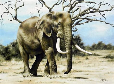 100 paint color elephant tusk stain tusks to stop elephant poaching painting elephant