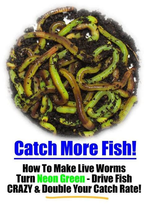 best compost worms 25 best ideas about nightcrawler worm on buy