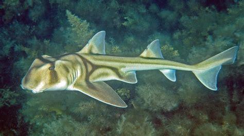 jackson shark jackson shark www pixshark images galleries