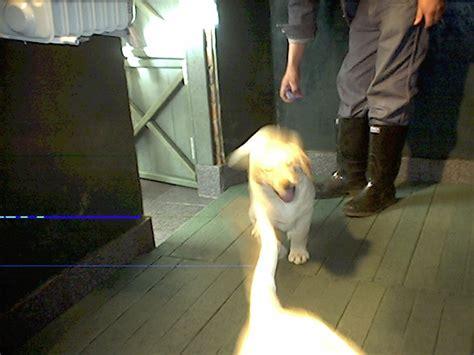 Tas Avi Js perros mascotas caninos gatunos