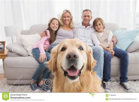 golden retriever family family sitting on the with golden retriever in foreground stock photo image of