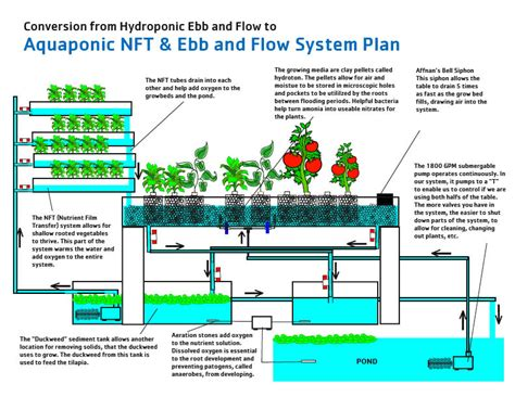 Salt Box House Plans by Aquaponics Systems A Review Of My Diy Aquaponics