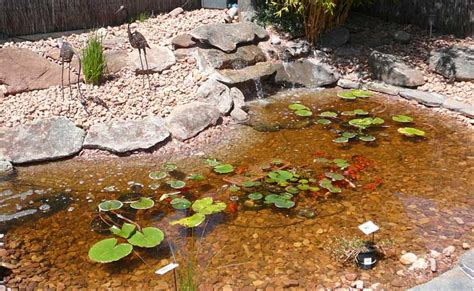 how to build a fish pond in your backyard how to build a concrete garden fish pond with