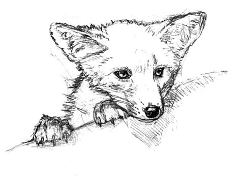 kit fox coloring page free fox running coloring pages