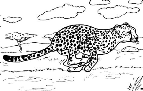 what color is a cheetah get this cheetah coloring pages printable 7nv41