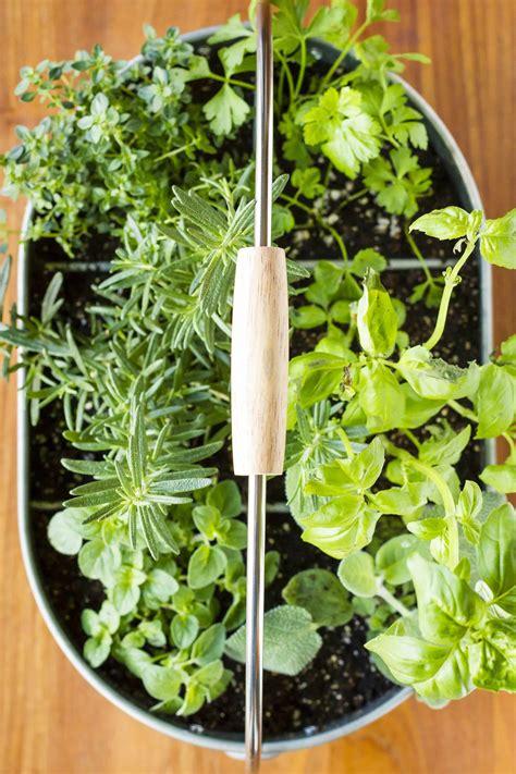 easy indoor herb garden simple  minute diy project