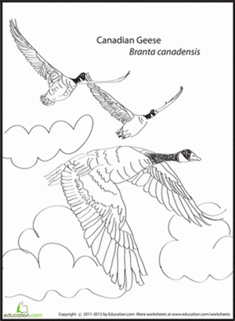 coloring pages of animals that migrate canadian geese coloring page coloring coloring pages