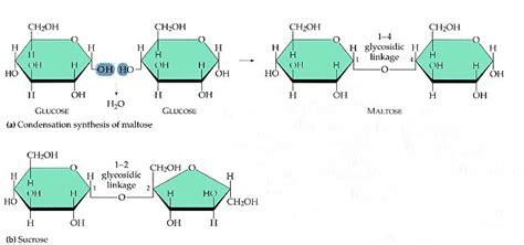 dehydration synthesis apbio