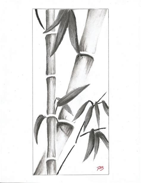 Drawing Of A Bamboo Tree by Bamboo By Rshaw87 On Deviantart