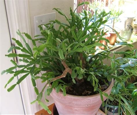 types of indoor plants types of cactus house plants photos