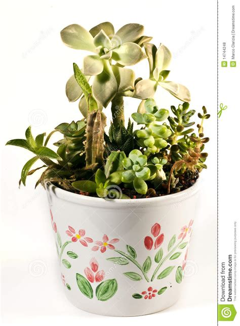 Succulent Vase by Succulent Vase Royalty Free Stock Photos Image 14744248