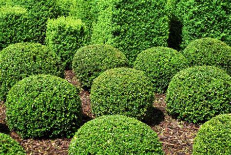 shrubs bushes landscaping designs ideas pictur