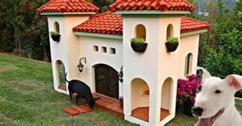 20 most luxurious dog houses video clips from the
