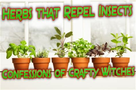herbal health care herbs that repel insects