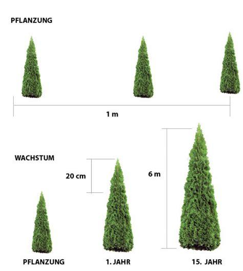 zypressen pflanzen anleitung 3535 zypressen pflanzen anleitung wacholder pflanzen und