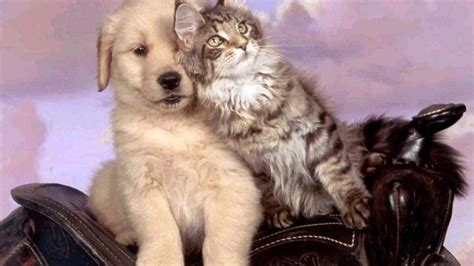 Puppy And Cat Wallpaper
