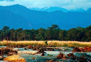 Low Light Tropical Plants - manas national park a travel guide insight india a